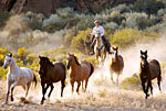 www.Riding-vacations.info Dude Ranch directory