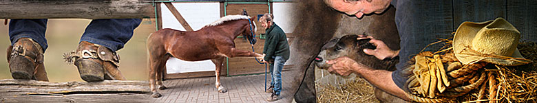 Work at Riding Stables or Ranches - Horse Jobs worldwide
