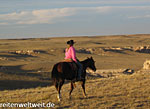 www.Riding-Vacations.info - Stalls for Guest Horse